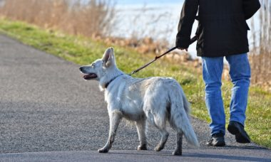 Você nunca deve apressar seu cão durante o passeio; saiba por quê
