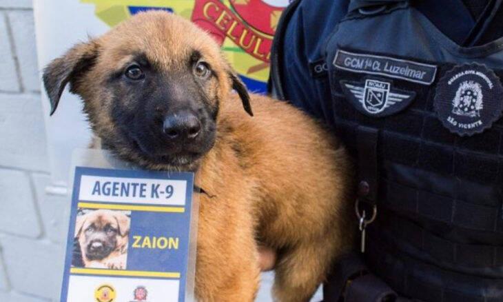 Fofura explícita: cães da polícia recebem crachás e quebram a internet