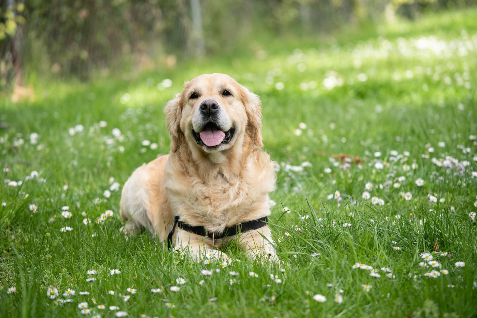 Conheça os benefícios da cinoterapia, a terapia assistida por cães