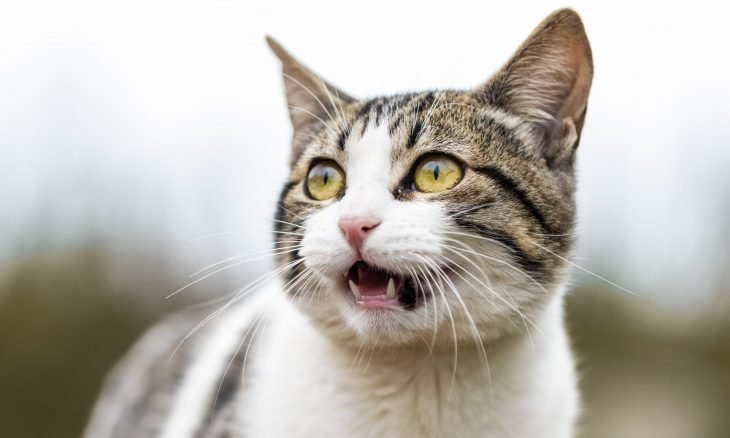 Família leva gato para cremação e, ao voltar para casa, dão de cara com ele