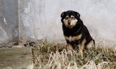 Após ferir seriamente garotinha de 6 anos, cães são sacrificados