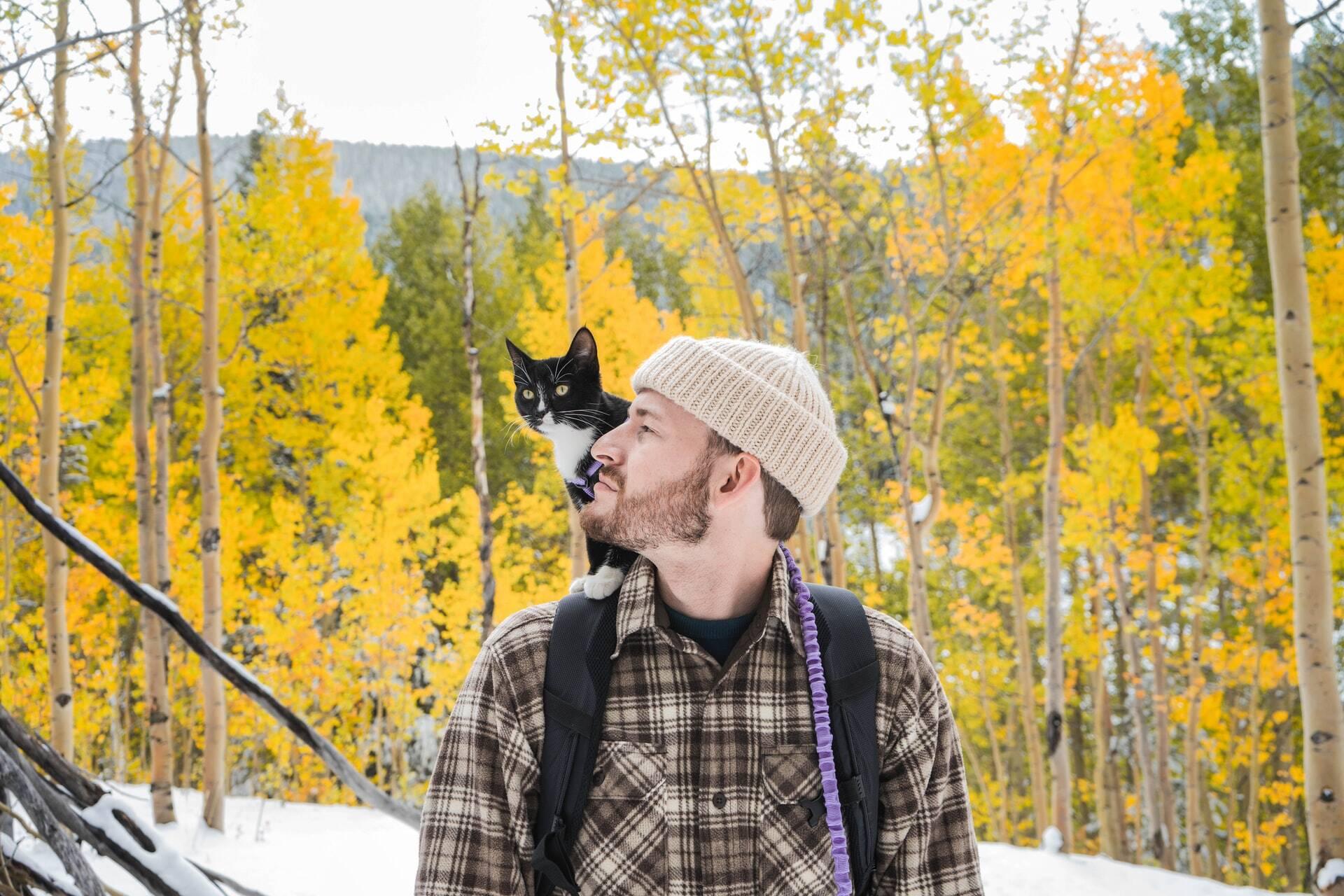 Existem 5 tipos de relação entre os gatos e seus humanos; saiba qual é a sua