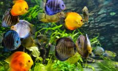 Série gratuita no YouTube traz tudo o que você precisa para montar um aquário