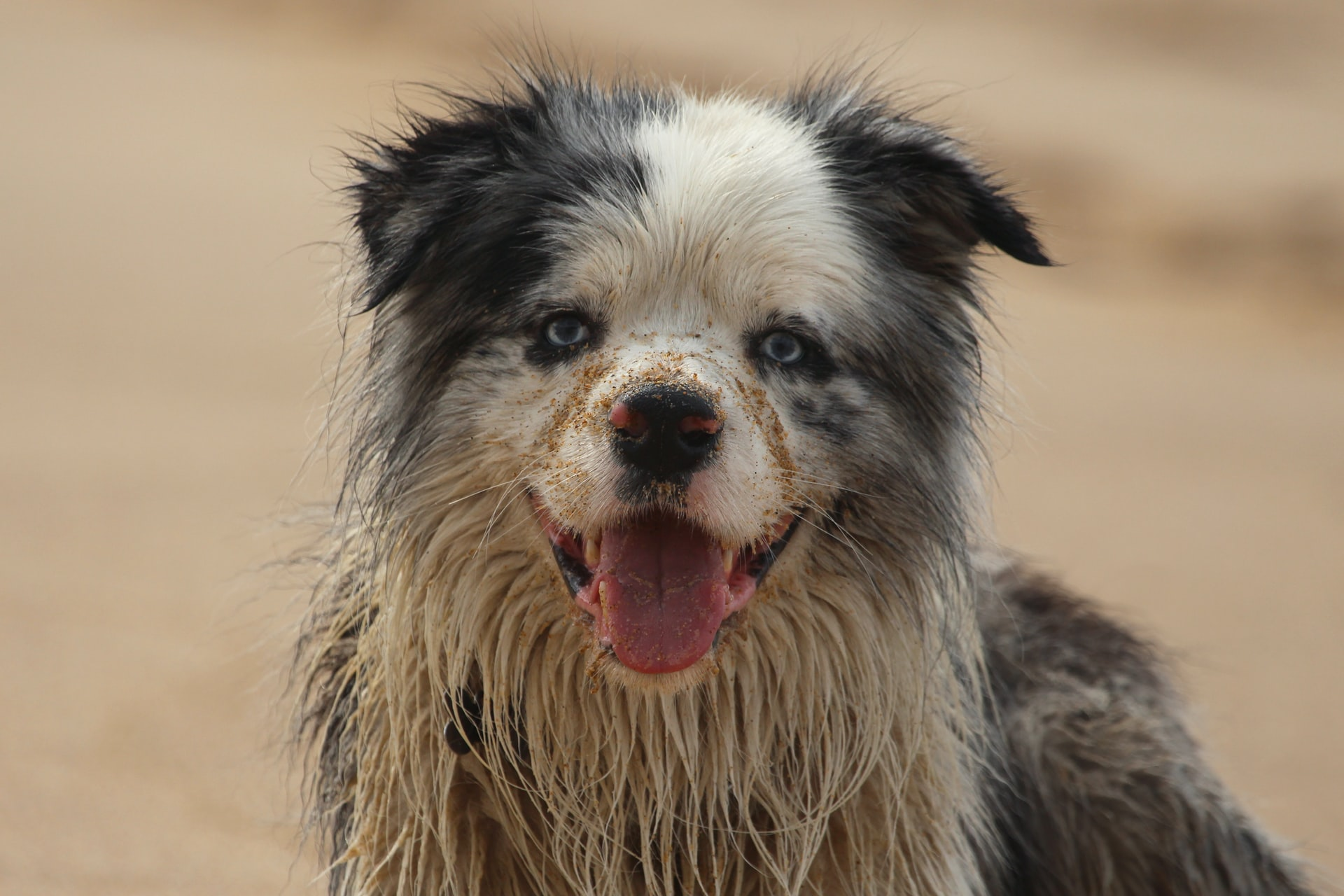 Entenda por que seu cão gosta de rolar na sujeira e saiba como detê-lo