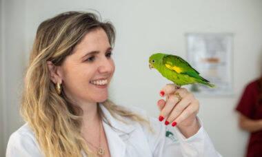 Tudo o que você precisa saber antes de levar um pássaro de estimação pra casa