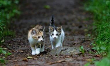 O que eu devo fazer se encontrar um filhote ou uma ninhada de gatos de rua?