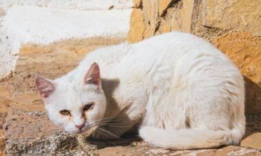 Idosa é encontrada morta e com metade do corpo devorado por seus gatos