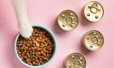 Aprenda a alimentar o seu gato do jeito certo e prolongue a vida dele