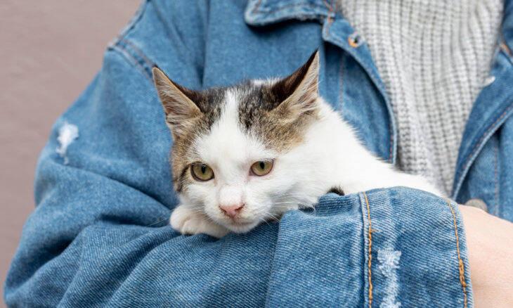 Há 5 tipos de dono de gato; saiba qual você é