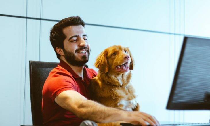 Se não puderem levar os cães para o trabalho, 10% dos britânicos cogitam pedir demissão