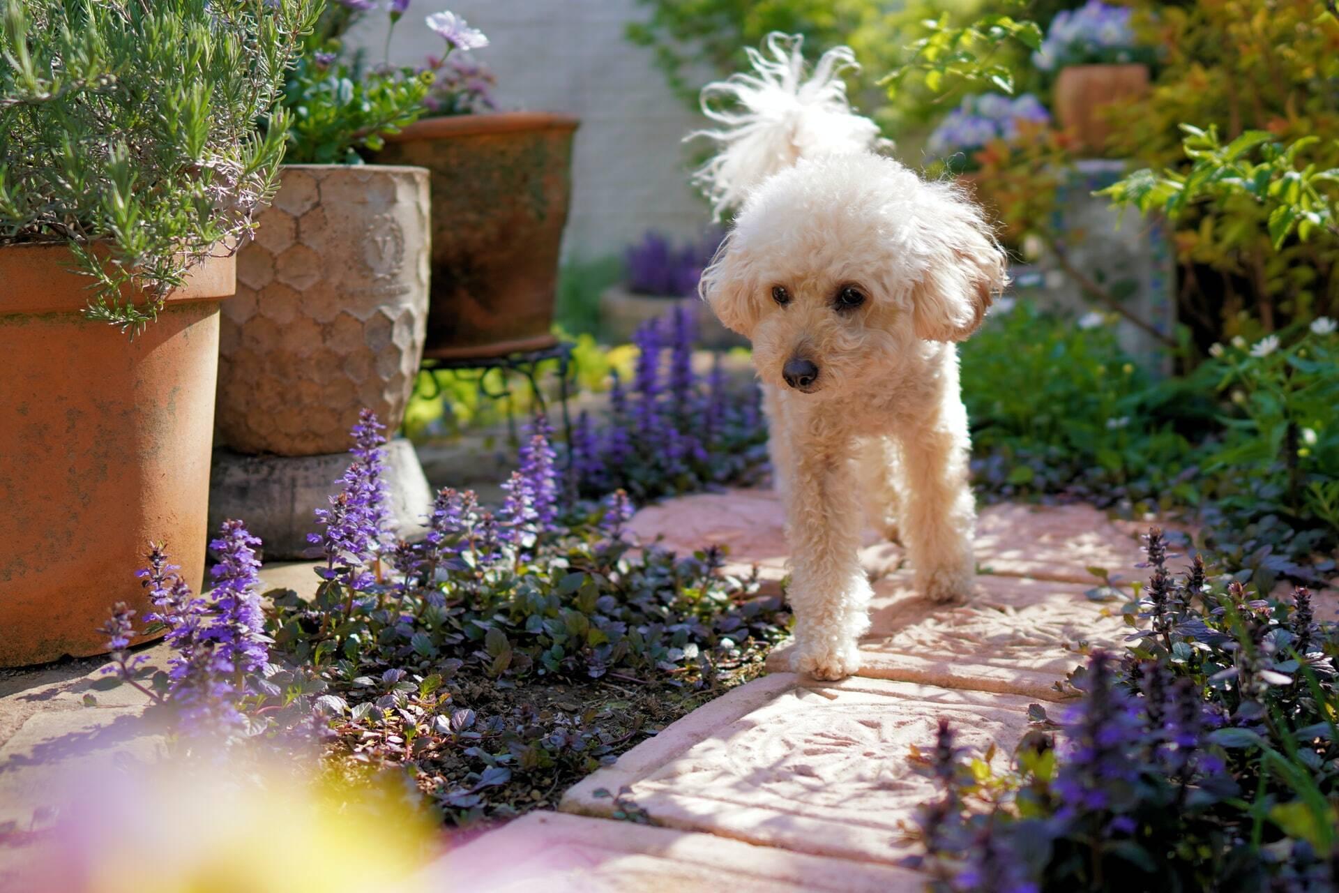 Saiba como proteger o jardim contra o seu cão e vice-versa
