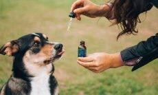 15 perguntas e respostas sobre CBD para cães