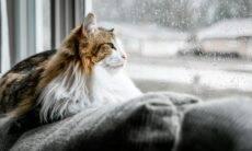 Gatos sentem solidão? Veja o que a ciência sabe a respeito