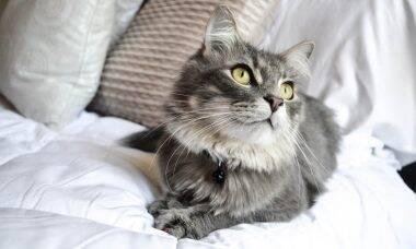 5 dicas para tornar perfeita a vida do seu gato
