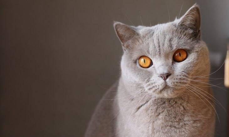 As fezes do seu gato podem transmitir toxoplasmose, doença perigosa para ele e para você
