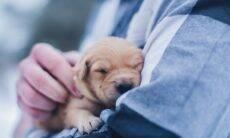Conheça os cuidados que você deve ter no 1º ano de vida do seu cão ou gato
