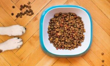 Veterinários explicam por que grãos devem ser evitados na dieta de cães e gatos
