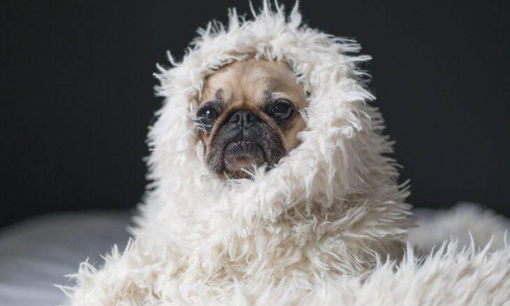 5 dicas para manter o seu cãozinho aquecido no inverno