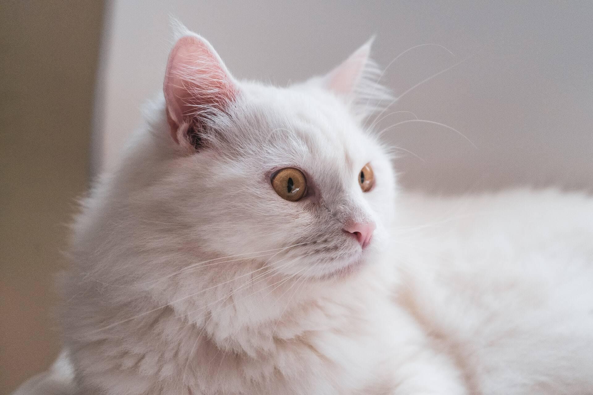 Saiba o que fazer caso seu gato pare de usar a caixa de areia