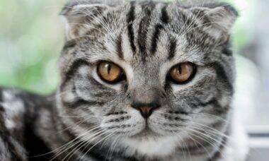 Aplicativo promete decifrar o estado de espírito do seu gato