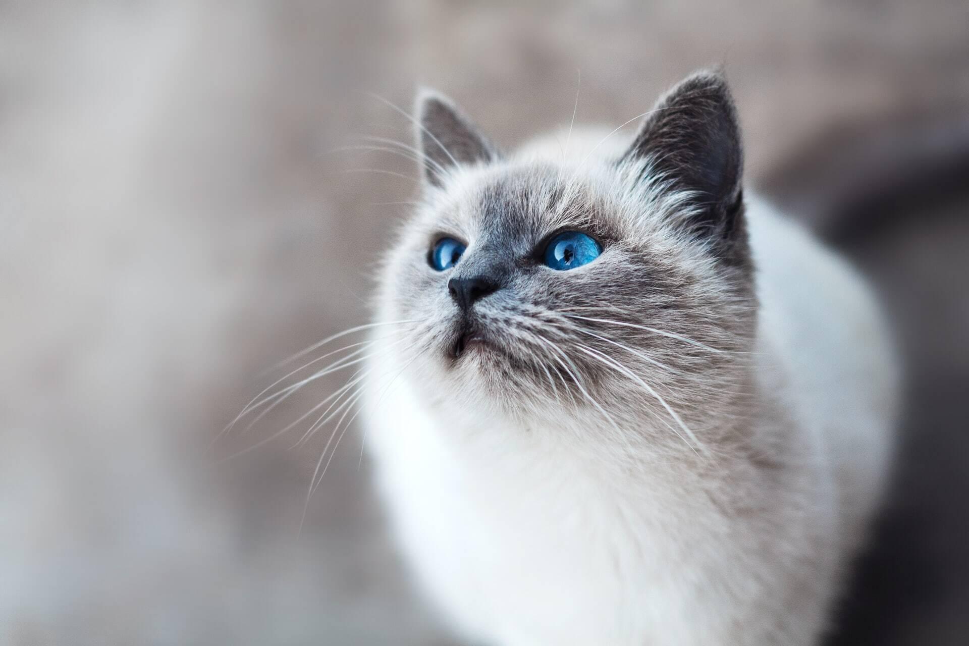 Por que gatos provocam mais alergias que cães? A ciência busca a resposta