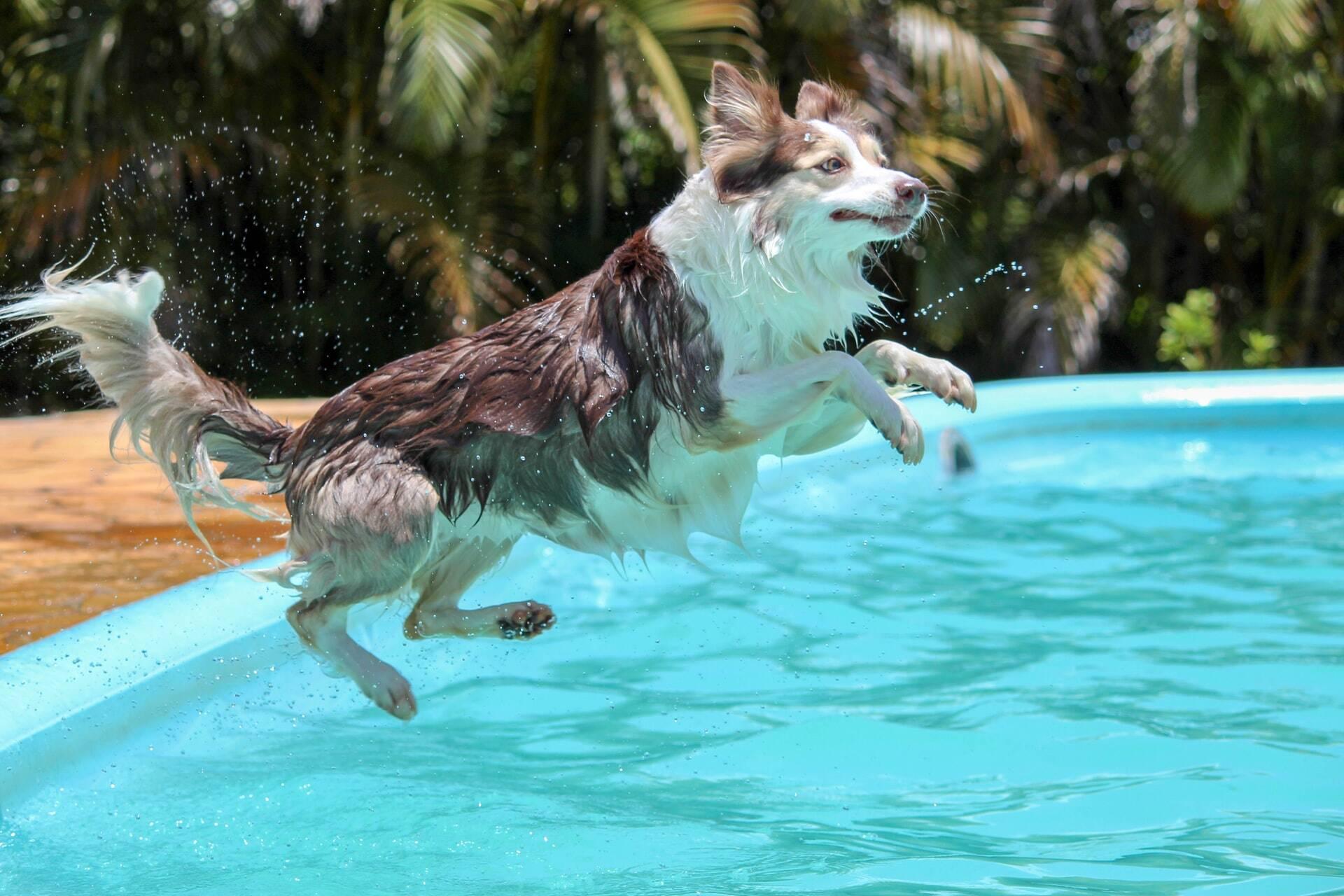 Saiba quais cães são bons nadadores e quais devem ficar longe da água
