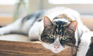 Entidade dos EUA lança manual para que gatos e donos tenham conforto no fim da vida