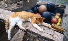 Pandemia aumenta o número de bichanos abandonados na Ilha dos Gatos