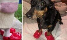 Fotos de cães calçando Crocs viralizam na internet