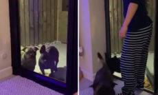 Vídeo: dono instala campainha para seus cães não ficarem mais fora de casa