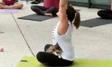 Vídeo fofo: Praticantes de ioga fazem aulas com filhotes para estimular adoção