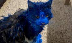 Polícia está na captura do autor de ataques a gatos com tinta azul