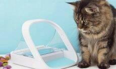 Novo aparelho permite controlar a hidratação do seu gato mesmo longe de casa
