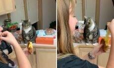 Vídeo: Gato fica 'hipnotizado' com queijo e viraliza