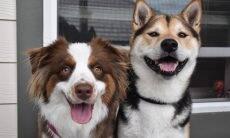 Vídeo emocionante: dona registra reencontro de cães amigos após um ano separados