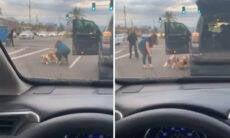 Vídeo: mulher se arrisca para salvar três cães em rua de tráfego intenso