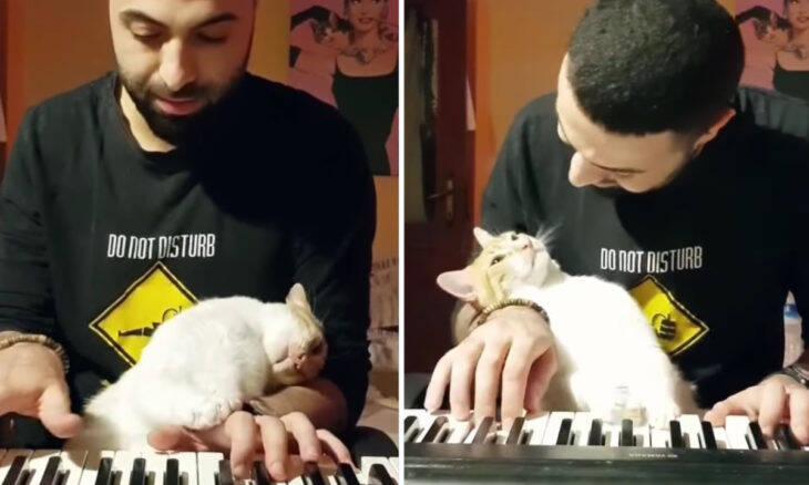 Vídeo fofo: dono toca piano enquanto é acariciado por seu gato