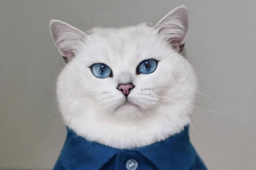 Vídeo: conheça Coby, o gato que viralizou na internet com a sua língua versátil