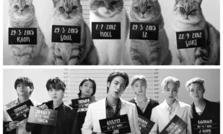 Vídeo: Clipe com gatos fazendo cover do grupo BTS enlouquece a internet