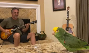 Vídeo: papagaio amazônico é a mais potente voz do rock pesado atual