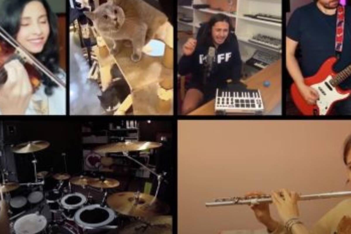 Vídeo: músico sul-africano transforma miados do seu gato em canção; violinista brasileira participa