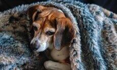 Saiba o que fazer para atenuar as dores do seu cão no frio do inverno