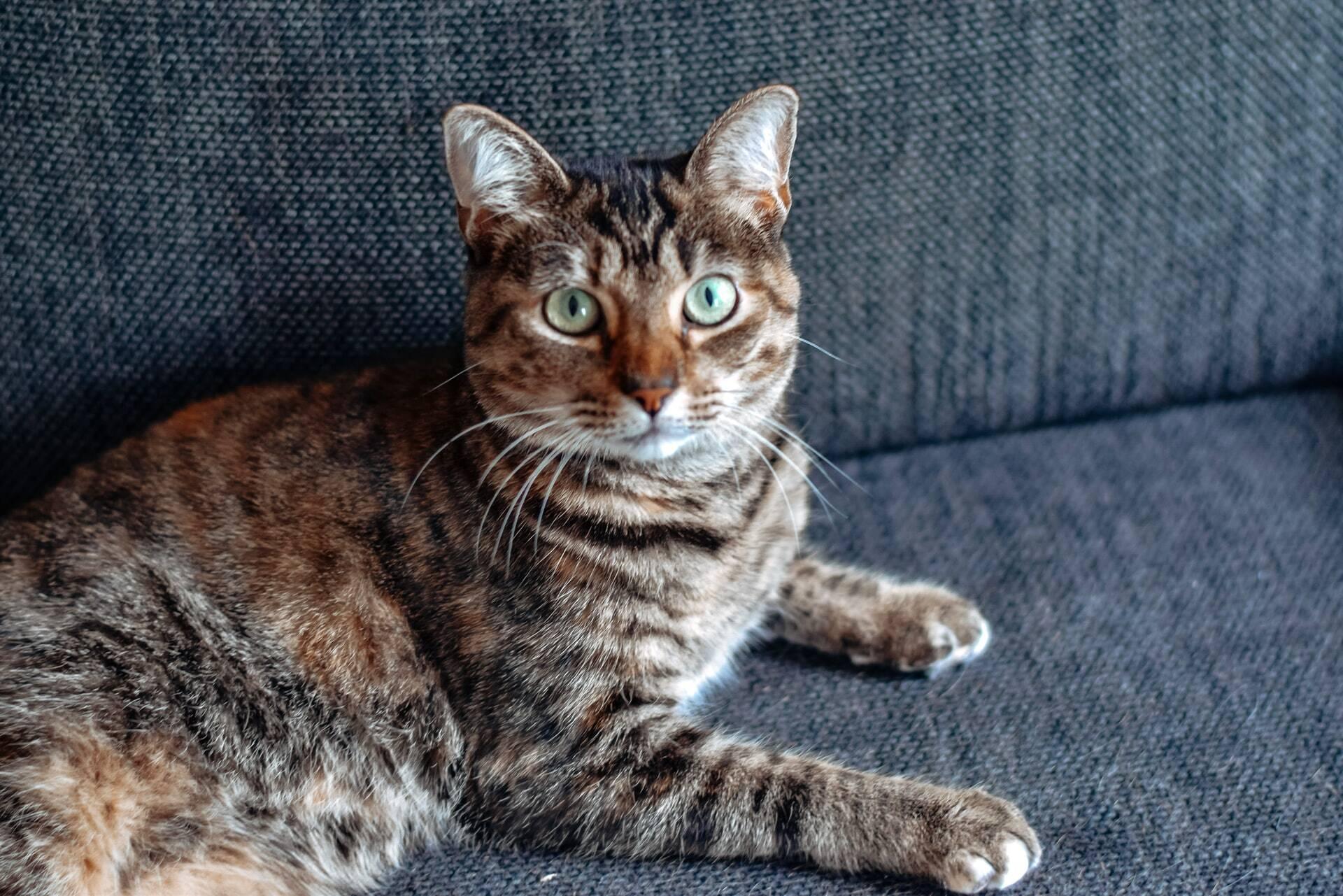 Saiba como fazer o seu gato parar de fazer cocô no chão