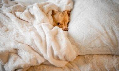 Prepare seu cão para o frio do inverno que vem aí