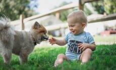 Saiba como preparar seu cão para conviver com um bebê