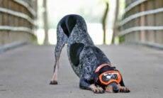 Conheça Dixie, a cachorra que reza e virou estrela da TV