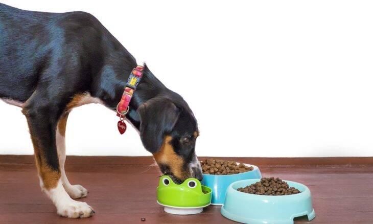 Veja o que o seu cão precisa comer para ter uma vida mais longa e saudável