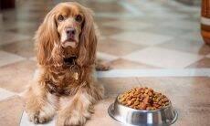 Saiba que cuidados tomar caso o seu pet tenha alergia alimentar