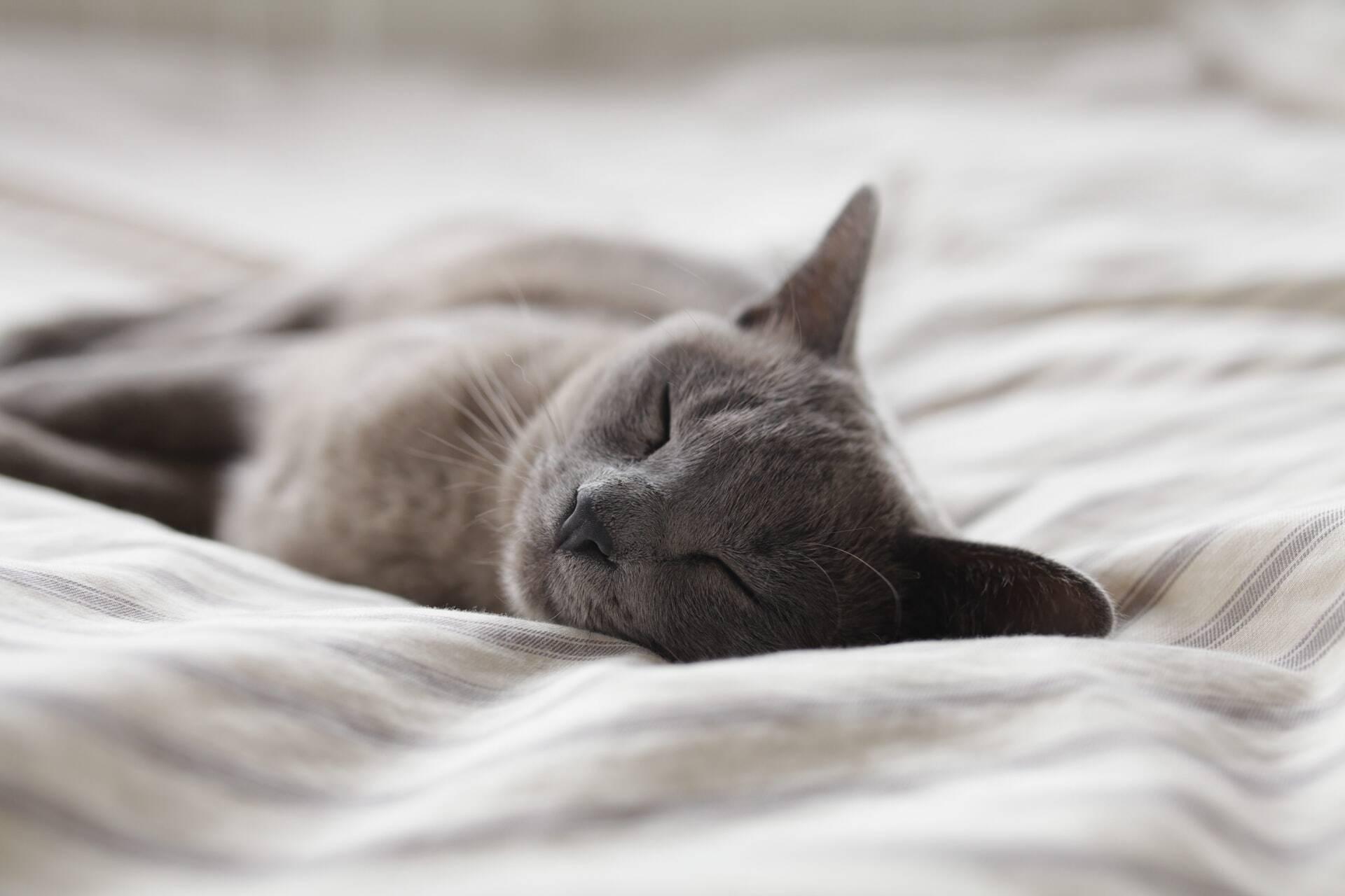 Especialistas explicam por que alguns gatos gostam de dormir na cabeça dos donos