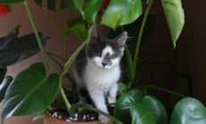 Confira 11 plantas comuns em casa e que são tóxicas para cães e gatos